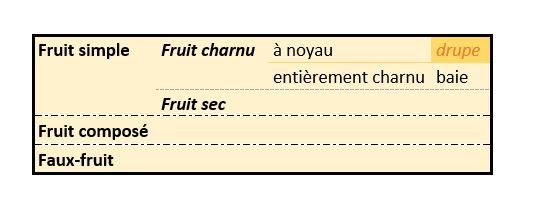 Prunelle classification